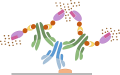 Immunohistochemistry protocol - Avidin/Biotin Method (ABC)